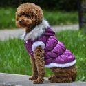 Kurtka dla psa z odpinanym kapturem - fioletowa, XS