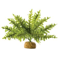 Exo Terra roślina do terrarium - Boston Fern Small, 20cm