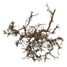 Dekoracja do terrarium – naturalny korzeń kwiatu pustynnego  25-40m