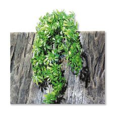 TerraPlanta Cannabis roślina do terrariów – 65cm