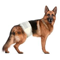 Pieluchy dla psów L-XL, 12 szt.