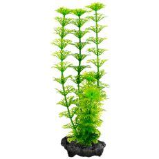 Roślina Tetra Ambulia, S - 15cm