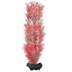 Tetra roślina akwaryjna - Red Foxtail M, 23cm