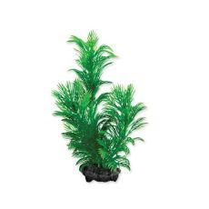 Tetra roślina akwaryjna - Green Cabomba S, 15cm