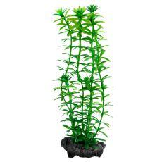 Egeria densa (Anacharis) - roślina do akwarium Tetra 15 cm, S