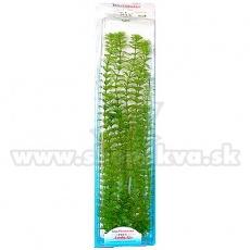 Limnophila sessiliflora ( Ambulia) - roślina Tetra 38 cm