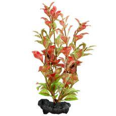 Ludwigia repens ( Red Ludwigia) - roślina Tetra 23 cm, M