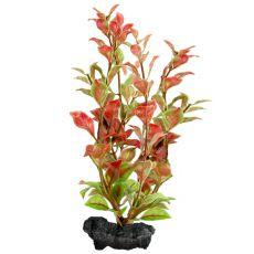 Ludwigia repens ( Red Ludwigia) - roślina Tetra 30 cm, L