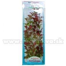 Ludwigia repens ( Red Ludwigia) - roślina Tetra 38 cm, XL