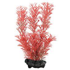 Myriophyllum heterophyllum (Red Foxtail) - roślina Tetra 15 cm, S