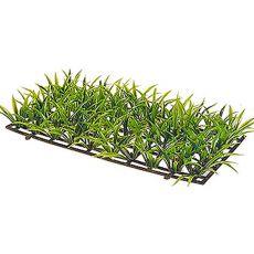 Sagitaria Platyphylla - roślina Hobby o wielkości 5 cm