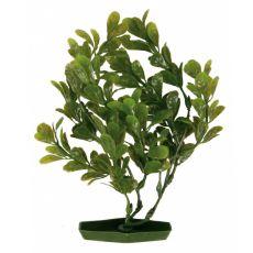 Roślina do akwarium, 25 cm - okrągłe zielone liście