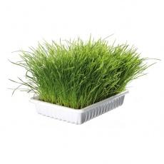 Trawa dla kotów 100g - napełniona