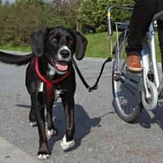Zestaw dla rowerzystów, w celu przymocowania dużych psów do roweru