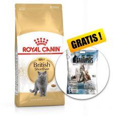 Royal Canin BRITISH SHORTHAIR 10 kg + PREZENT
