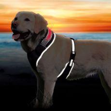 Szelki dla psa ze świecącym pasem S-M, 45-60cm