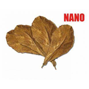 Migdałecznik właściwy - suszone liście NANO, 12 szt.