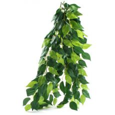 Ficus silk medium - roślina do terrarium, 55cm
